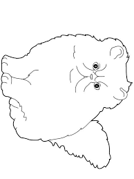 Coloring Page Fat Cat Img 22641