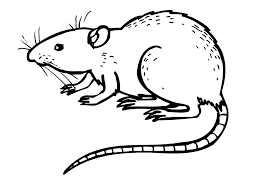 Small Picture Free Printable Rat Coloring Pages For Kids