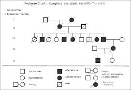 Family Tree Chart Maker Best Family Pedigree Maker Pedigree