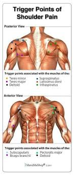 Shoulder Trigger Points Chart Pin On Massage Therapists Estheticians