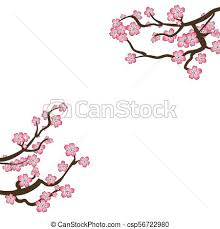 Branch Template Vector Sakura Frame Blooming Branches Isolated On White Background Blank Design Template Cherry Flowers