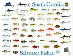 97 Best Fish Chart Images Fish Chart Fish Freshwater Fish