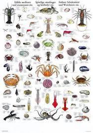 412 Best Animal Species Images In 2019 Animal Species