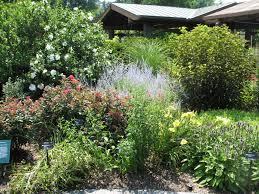 best garden plants. Best Garden Plants