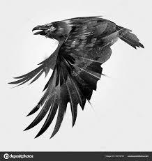 ᐈ ворон гравюра фото и картинки ворон тату скачать изображения на