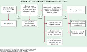 Tetanus Harrisons Principles Of Internal Medicine 20e