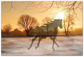 Die Letzte Reise Unserer Pferde