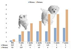 Teacup Maltese Growth Chart Maltese Chart 15 Free Online Puzzle Games On
