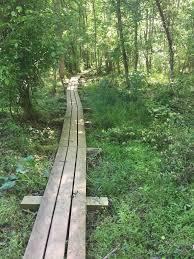 Bridle Trail (Cedarock Park) | Piedmont Legacy Trails | Piedmont Legacy  Trails