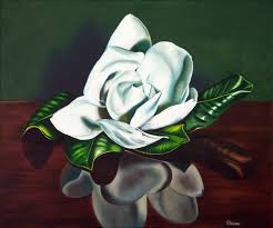 southern magnolia oil painting by kerri meehan km118