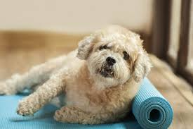 helping dogs with anxiety. Delighful With Dog On Yoga Mat For Helping Dogs With Anxiety