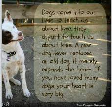 Dog Passing Quotes Amazing Quotes About Loss Of Dog On QuotesTopics