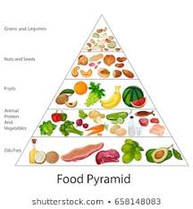 What Is Food Pyramid Chart Food Pyramid Images Stock Photos Vectors Shutterstock
