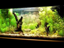 Image result for cost of aquarium cleaners