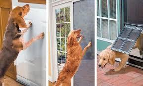 door protector from dog