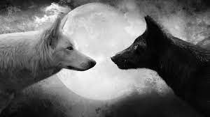 Cool Wolf Backgrounds Wallpaper 1920 ...