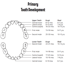 When Do Babies Get Teeth Chart Baby Teeth Order And Baby Teeth Chart