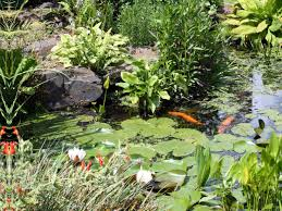 Small Picture Design a Water Garden HGTV