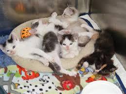 animal shelter kittens. Brilliant Shelter Animal Shelter Full Of Cats And Kittens Permanent Foster Homes Needed In Kittens