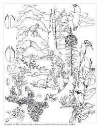 Biomes Coloring Pages Ecosystem Page Forest Biome – castvertising.com
