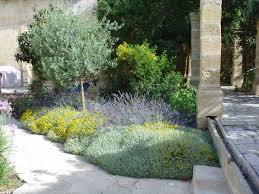Small Picture santolina lavender tulbaghia westringia phoenix roebellenii