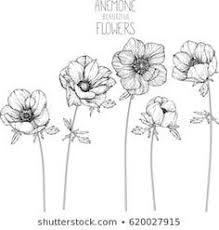 Fiori Facili Da Disegnare Disegno Di Un Fiore Rametto Fiorito