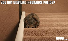 75+ of the best insurance memes by topic. I Can Has Cheezburger Life Insurance Funny Animals Online Cheezburger