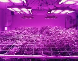 Do Grow Lights Work Cheap Led Grow Lights That Work Full Spectrum Led Grow