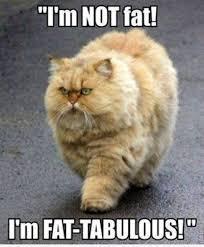 Fat Memes on Pinterest via Relatably.com