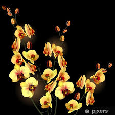 orchid yellow flower isolated on black