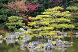 Small Picture japanese zen garden in kinkakuji temple park kyoto Gardens