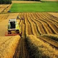 Сельское хозяйство Туркменистана