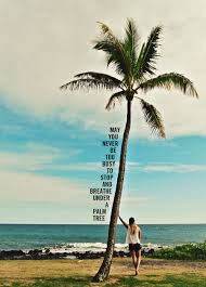 May You Never Be Too Busy Beach Coastal Living Palm Tree