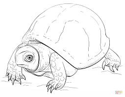 Small Picture Reptiles coloring pages Free Coloring Pages