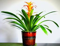 tropical house plants elegant tropical house plants indoor safe for cats photos