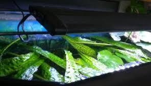 Attractive Wird Eine LED Aquarium Beleuchtung Das Wachstum Von Algen Beeinflussen?