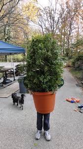 picture of shrub bush plant costume