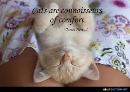 Comfort Quotes Simple Comfort Quotes Quotes About Comfort YourDictionary