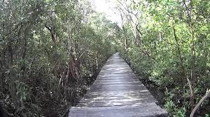 ป่าโกงกาง เทียนทะเล - YouTube