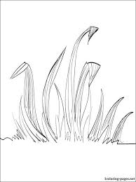 Small Picture Grass coloring page Coloring pages