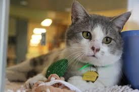 humane society kittens for adoption. Exellent Kittens Throughout Humane Society Kittens For Adoption W
