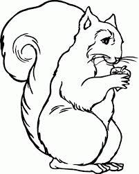 Kleurplaten Eekhoorns Bewegende Afbeeldingen Gifs Animaties
