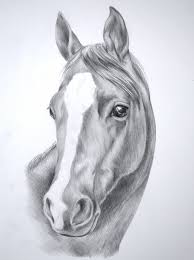 horse face picture drawing realistic horse face sketches
