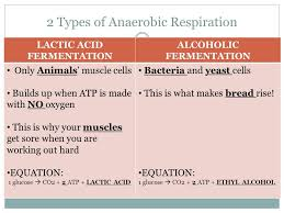 anaerobic vs aerobic respiration do now with your partner state a word equation for anaerobic cell respiration in humans ib