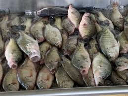 Texas Fish Chart James Reed Guide Service 903 879 5774 Richland Chambers