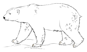 Small Picture Polar Bear walking coloring page Free Printable Coloring Pages