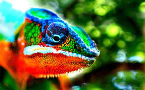 Nice Chameleon Wallpaper - Best ...
