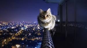 cute cat hd image 2625