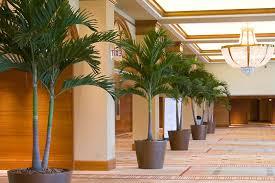 office indoor plants. Indoor Plants In Hotel Office I