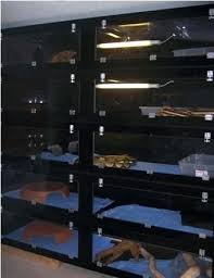 reptile rack pet cages for snakes custom reptile cage amp rack system pertaining to snake